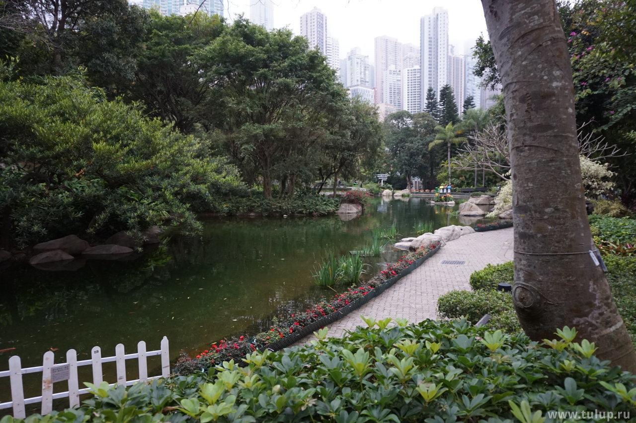 Пруд в парке Гонконг