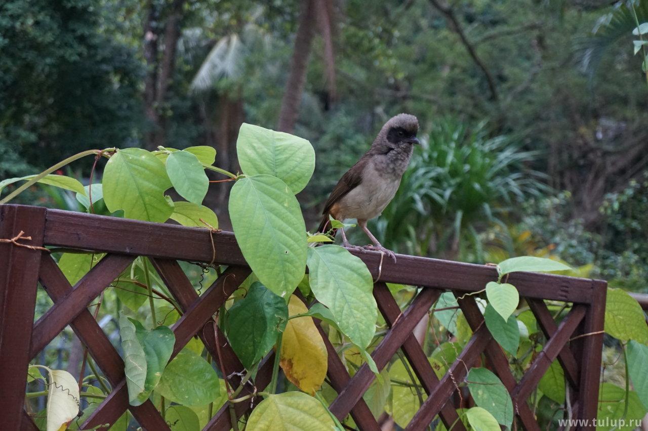Мохнатый птиц