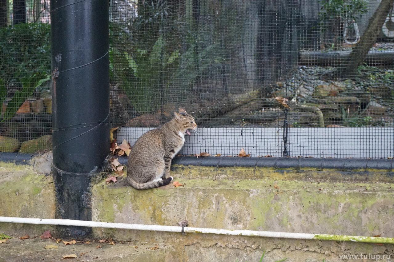 Кошка созерцает ибисов в авиарии