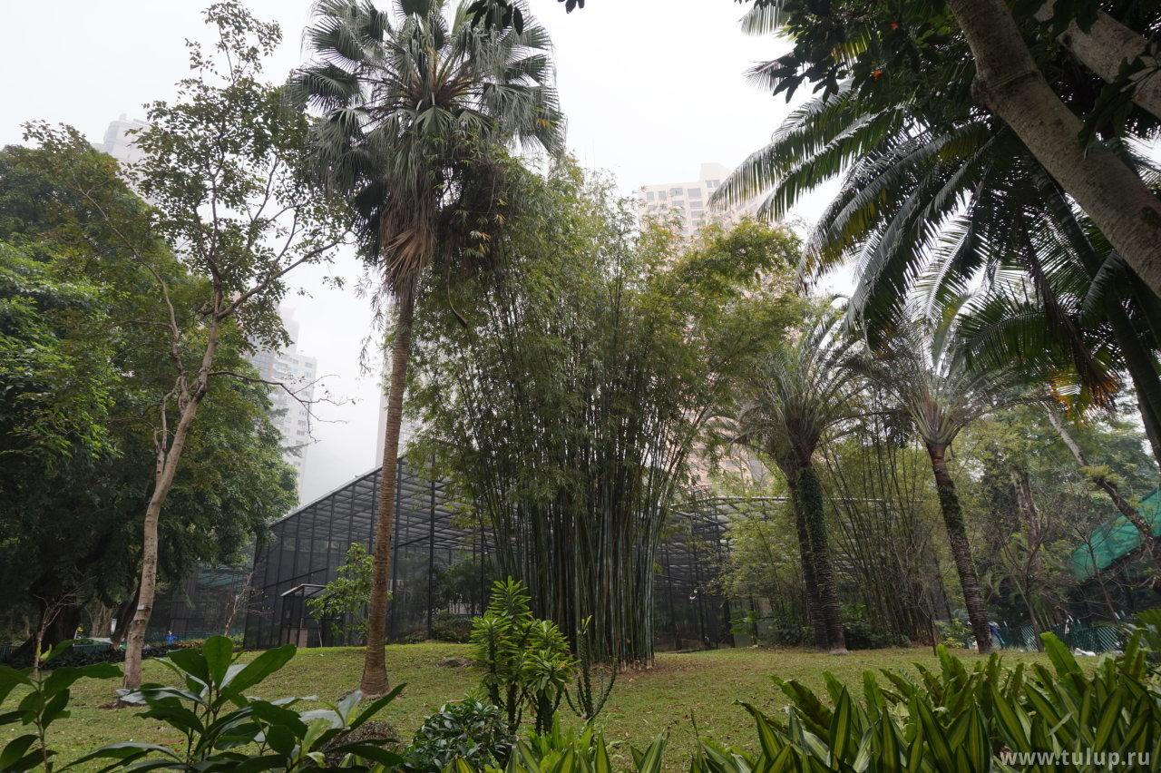 Бамбуковый куст