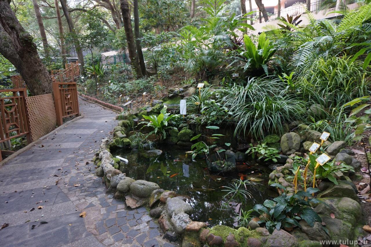 Сад лекарственных растений, используемых в традиционной китайской медицине
