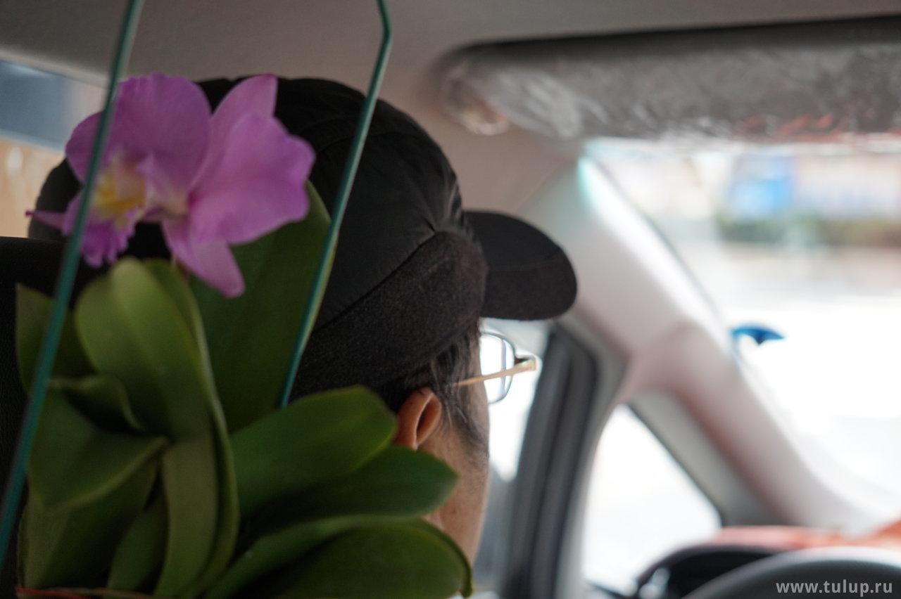 Живые цветы в такси (на камеру был обут телевик, поэтому крупным планом и не в фокусе)