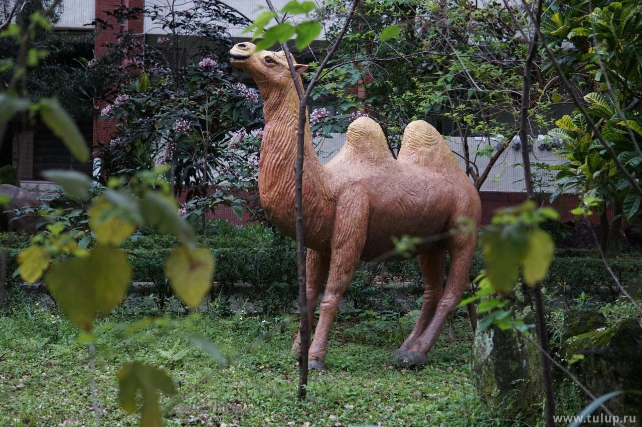 Внезапно верблюд
