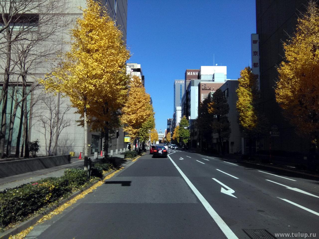 Gingko street
