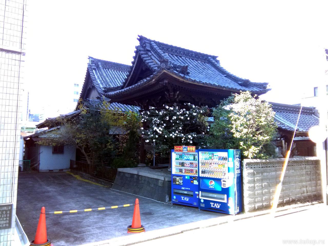 Японская камелия и традиционные японские беседки