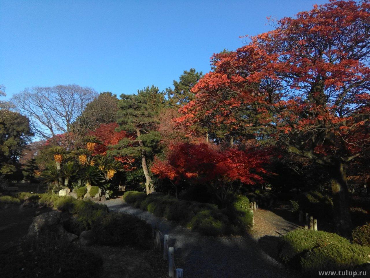 Традиционный сад: камни и деревья
