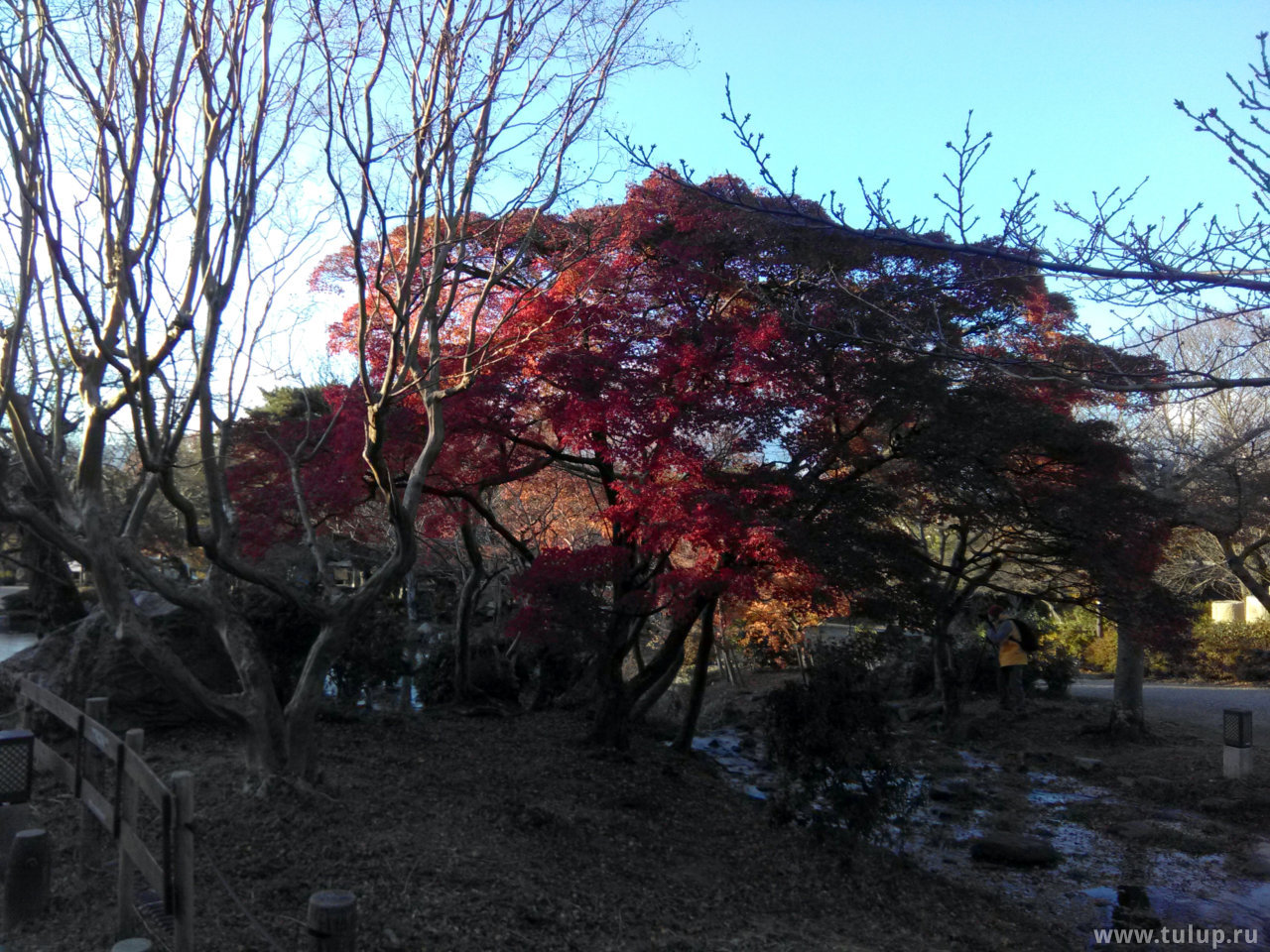 Из Киото